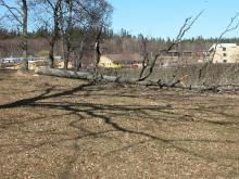 puu langetamine